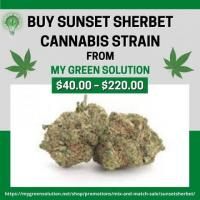 Buy Sunset Sherbet Cannabis Strain