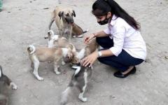 Help The Dogs By Giving Donation