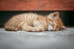 Persian Cat and Kitten for Sale in Noida