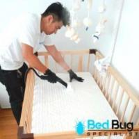 Bed Bugs Singapore