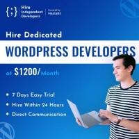 Hire WordPress Developers | Hire Within 24 Hours