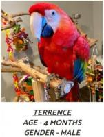 Excellent Scarlet Macaw for Sale