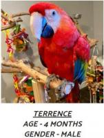 Scarlet Macaw for Adoption
