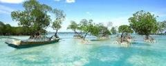 Andaman with neil island Tour Packages.