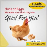 Nutrifresh Eggs - Organic Chicken Farm in Hyderabad